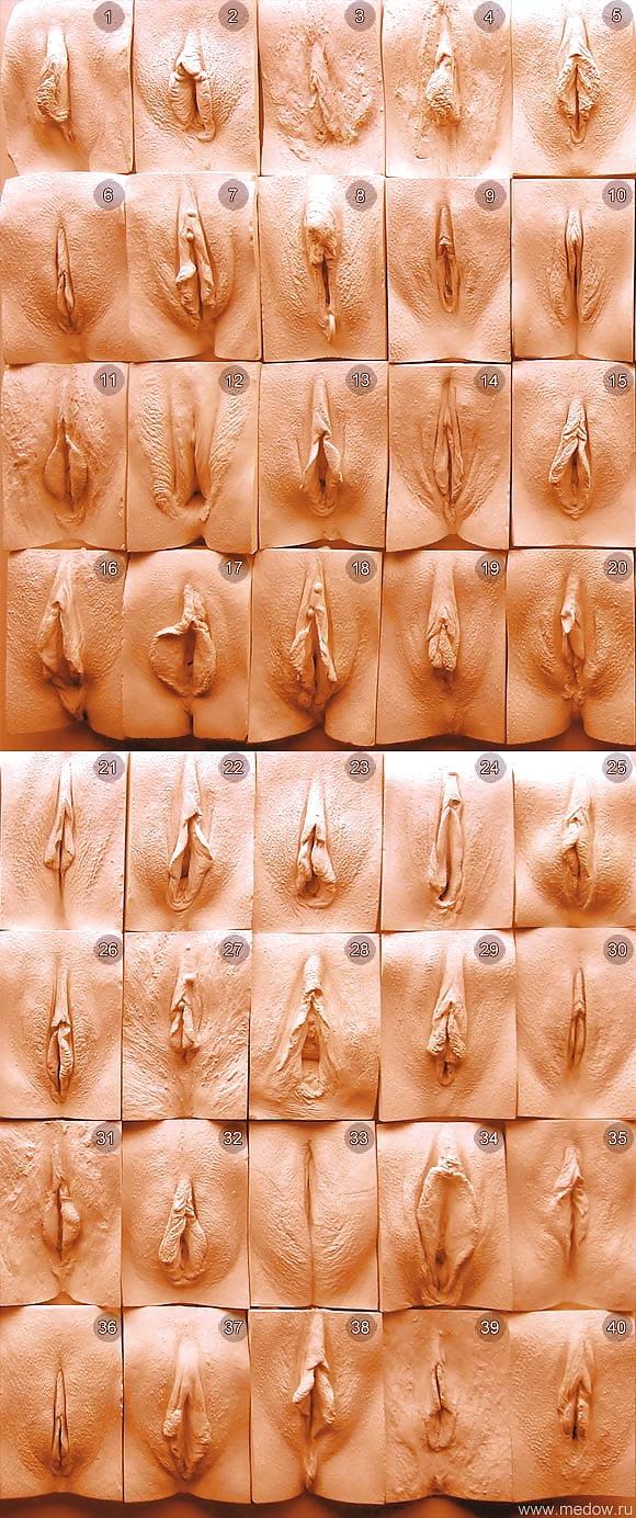Все разновидности женских половых губ фото