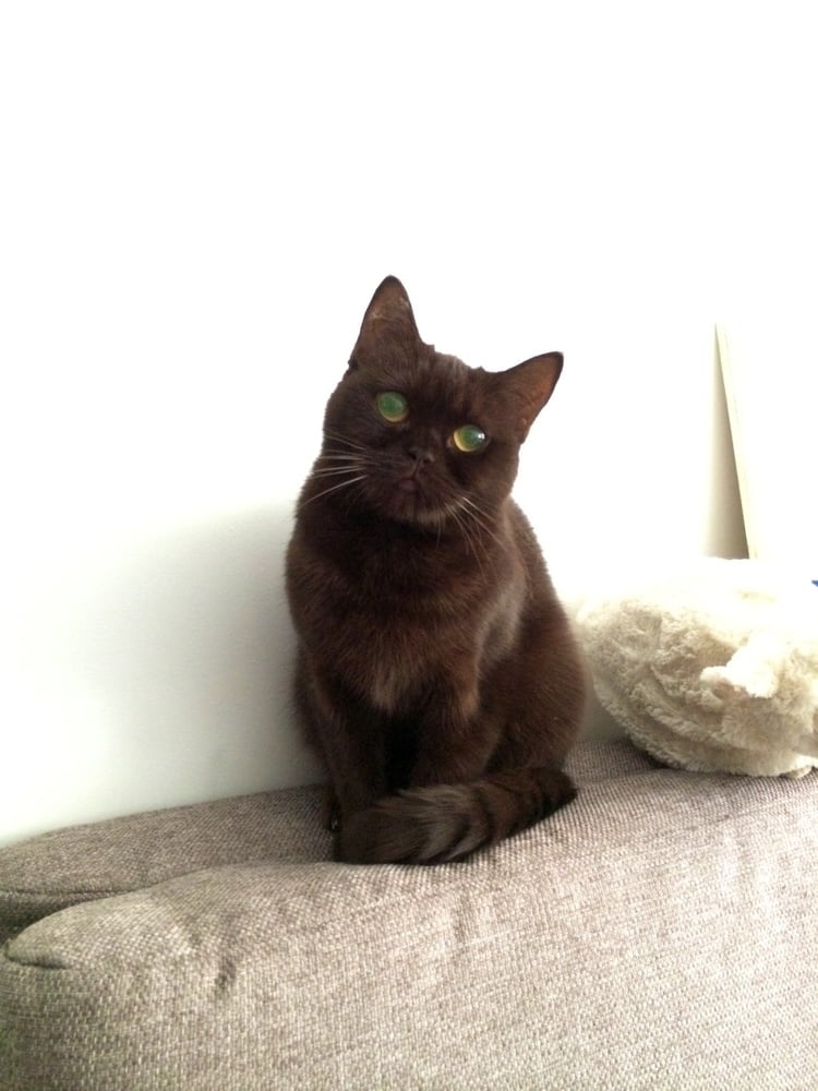My pussy)))) - 8 Pics