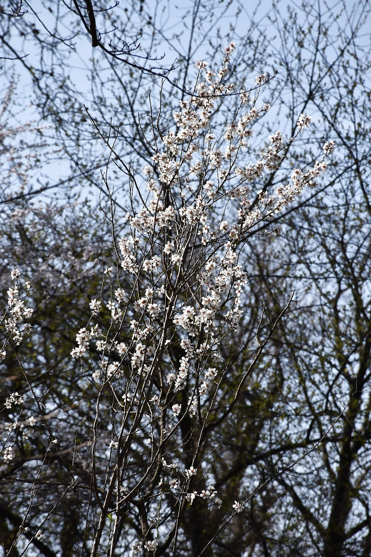 Gabriela flores salva da silva y violeta en el seb - 2 part 6