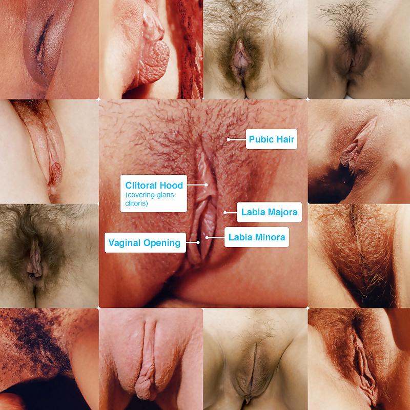 какой должен быть женская вагина с фото и какие бывают